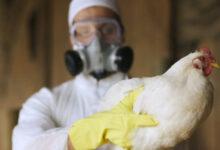 Photo of Птичий грипп: данные на 25 сентября