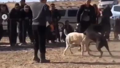Photo of Видео собачьего боя в Мангистау было снято три года назад