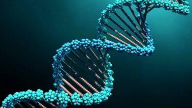 Photo of «Вирусы — это остатки ДНК умерших клеток» — манипуляция
